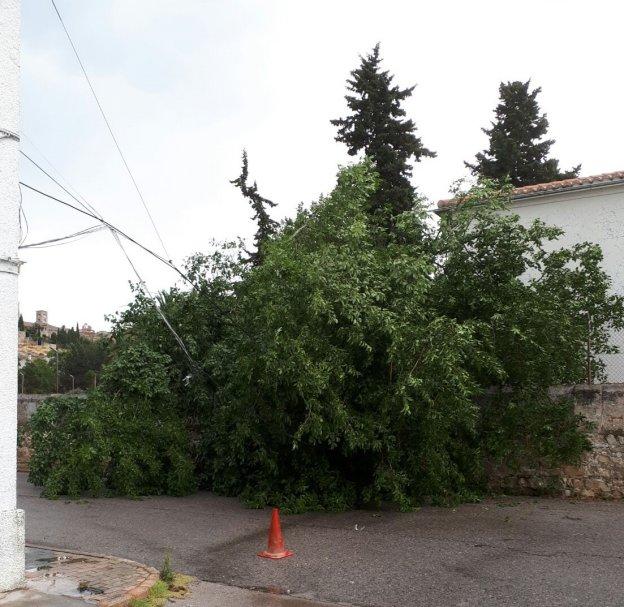 La tormenta y el viento causan la ca da de rboles y for Estudiar jardineria