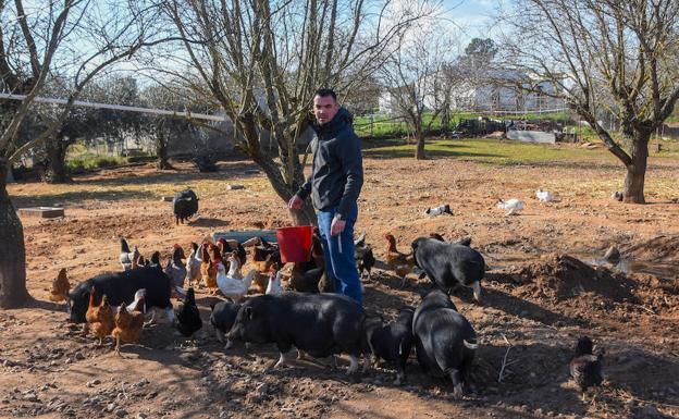 No hay mejor reclamo para los cerdos, las gallinas y los conejos que el cubo de pienso sonando.